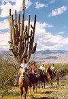 Trailride_large_cactus